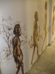 Musée préhistoire rânes