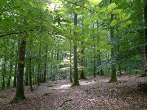 Forêt de Gouffern